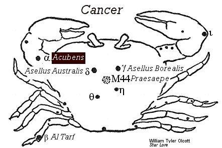 Acubens