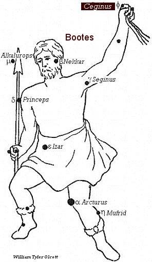 Ceginus